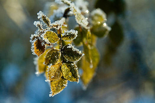 Winter Green by Kim Lagerhem