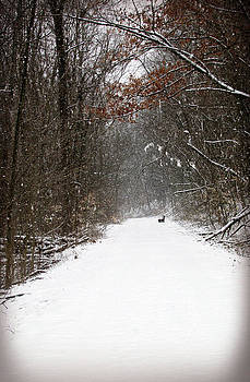 Winter Path by Andrea Dale