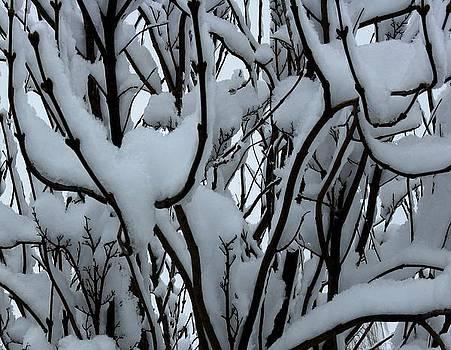 Winter Pattern 1 by Debbie Finley