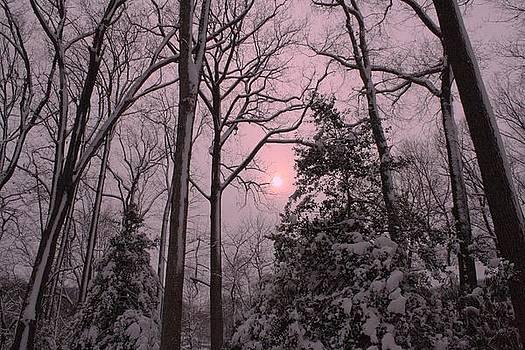 Winter Sun by Daniel Rooney