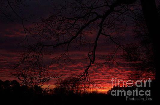Winter Sunset  by Jinx Farmer