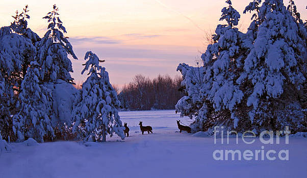 Winter Sunset with Deer by Kathy DesJardins