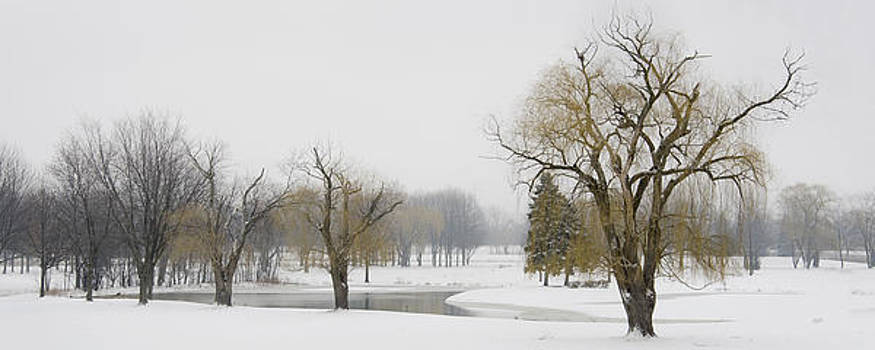 Winter trees and pond by James Blackwell JR