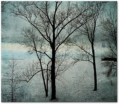 Winter Trees by Dianne  Lacourciere