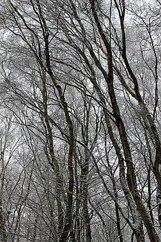 Winter Woodland by Derek Sherwin