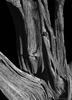 Wood by Peri Craig