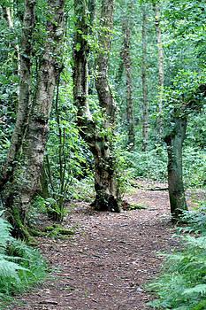 Woodland walk by Derek Sherwin