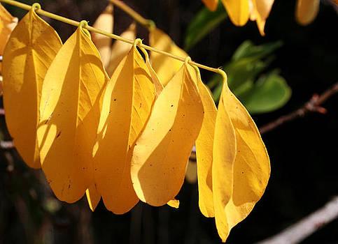 Yellow by Cora Brum