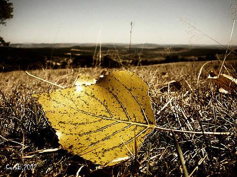 Yellow Leaf by Cora Brum