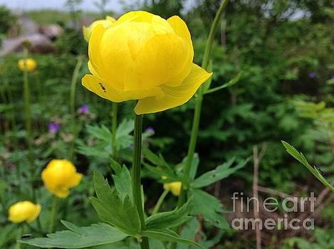 Yellow morning lover  by  Andrzej Goszcz