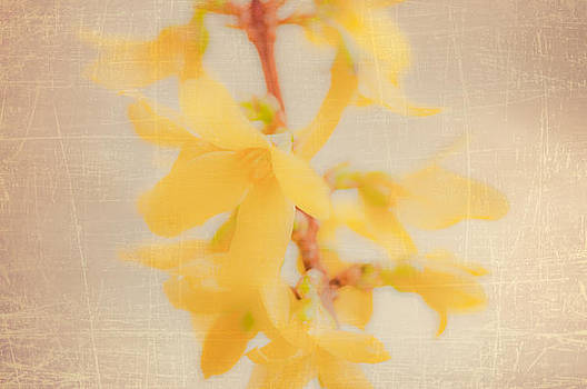 Yellow orchid by Silvia Alcantara