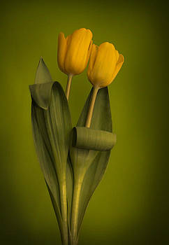 Yellow Tulips on a Green Background by Eva Kondzialkiewicz