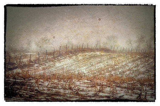 A Cold Field by Kimberleigh Ladd