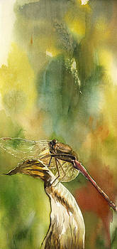 Alfred Ng -  a lost dragonfly