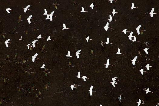 JOHN FERRANTE -  Avian Aerial