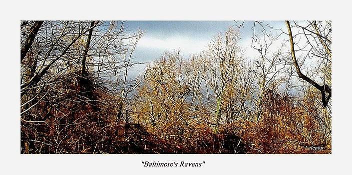 Baltimores Ravens by James  Lalepop Becker