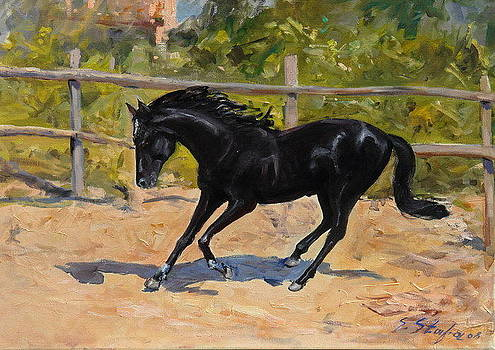 Black Horse by Sefedin Stafa