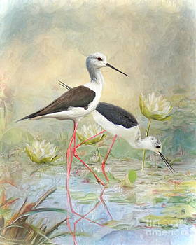 Black Winged Stilt by Trudi Simmonds