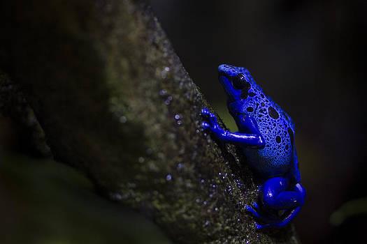 Brilliant Blue by Windy Corduroy