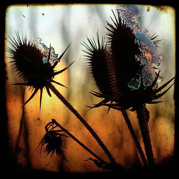 Gothicrow Images -  c est la vie sunset