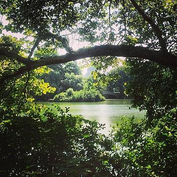 🍃 #centralpark #nyc #nature #green by Alejandra Lara