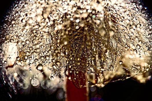 Peggy Collins -  Dandelion Dew in Bronze
