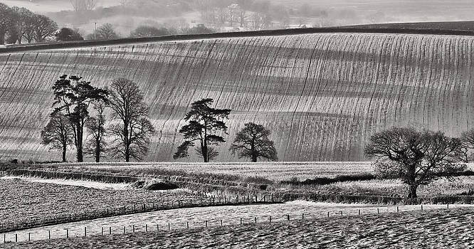 Fields and trees by Pete Hemington