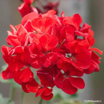 Flower In Greenhouse 2 by Ed Hernandez