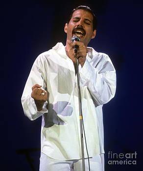 Freddie by David Plastik