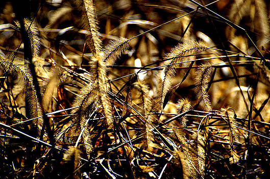 Golden Weeds  by Karen Kersey