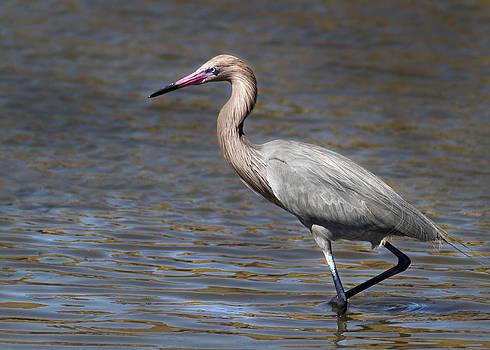 Heron by John Hix