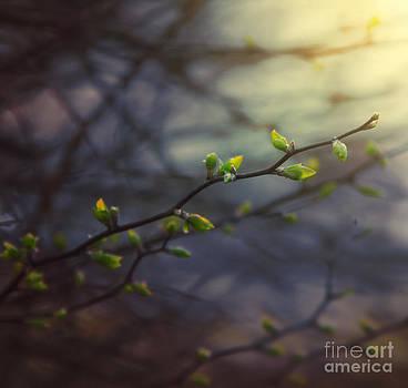 Natural Lightness of Being by Monika Pachecka