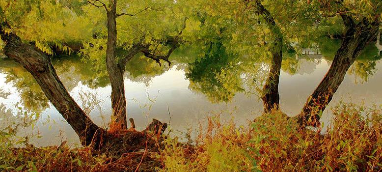Linda Sannuti -  Old Country