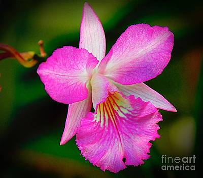 Orchid Flower by Nicola Fiscarelli
