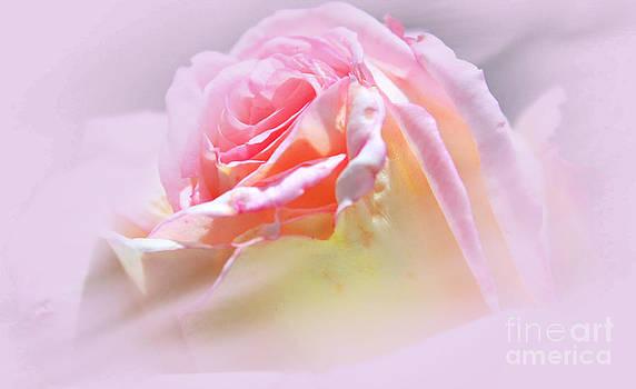 Peaceful Pink Rose Haze by Judy Palkimas