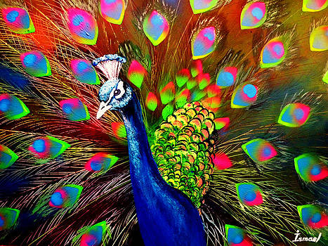 Peacock by Ismael Paint
