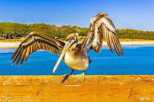 Pelican Posing  by Ed Roberts