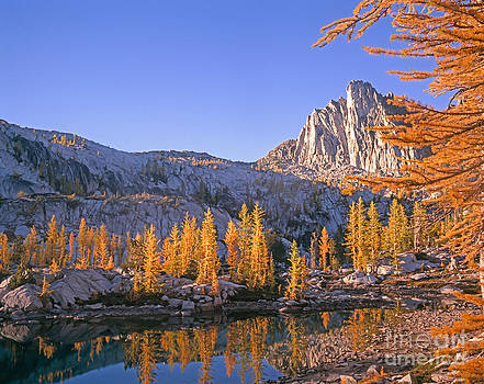 Prusik Peak behind Larch trees by Tracy Knauer