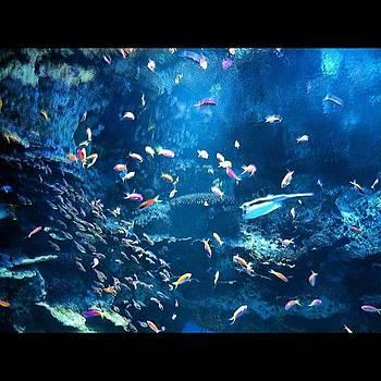 💙💜💚❤💛 Rainbow Fish by Kahsha Ward