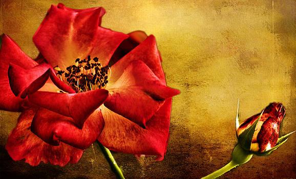Scarlet Flower by Ludmila Nayvelt