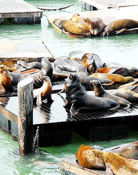 Seals on The Bay Part I by Sue McElligott