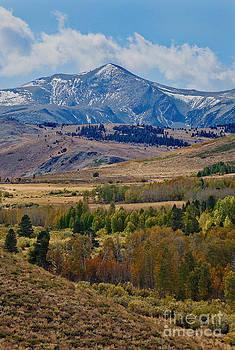Mae Wertz -  Sierras Mountains