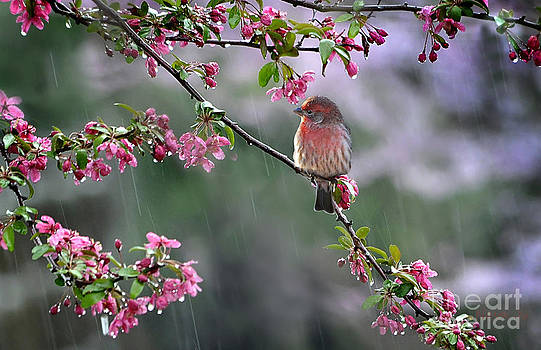 Singing in the Rain  2   by Nava Thompson
