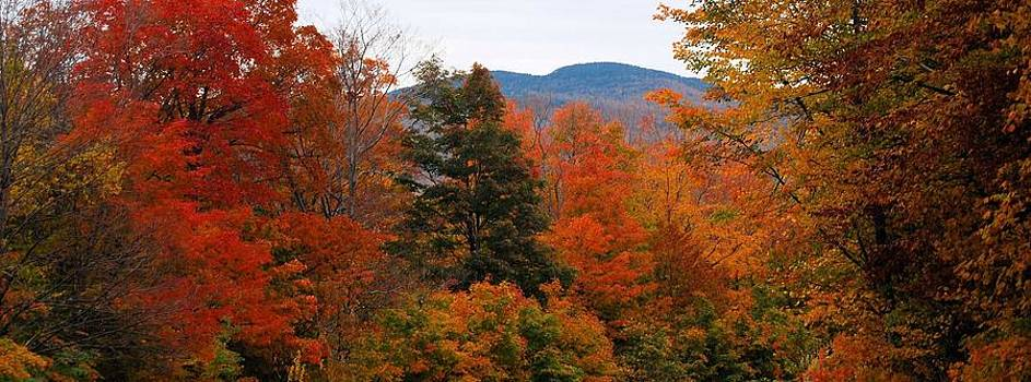 Vermont Glory by Jean Sproul