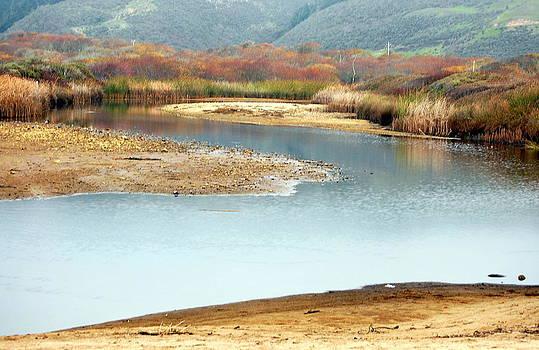 Wetlands of Scott Creek by AJ  Schibig