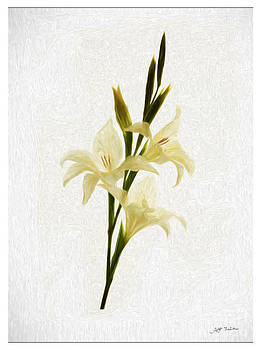 White Gladiolus Mixed Media Painting by Heinz G Mielke