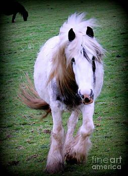 Wild Irish Pi-bald Mare. by Joseph Doyle