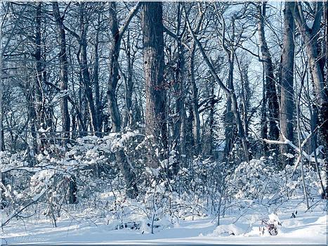 Winter Blue by Mikki Cucuzzo