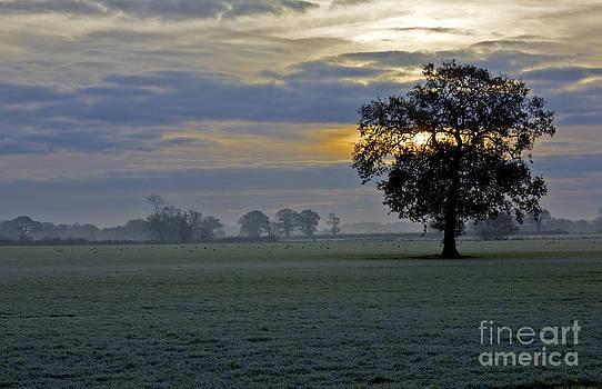 Darren Burroughs -  Winter landscape