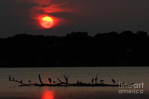 0016 White Rock Lake Dallas Texas by Francisco Pulido